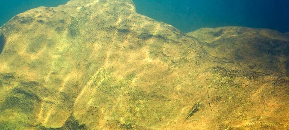 Garra salweenica