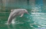Cetacea Order