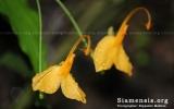 Magnoliophyta Division