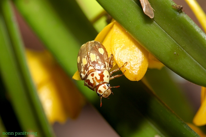 beetle_yellow.jpg
