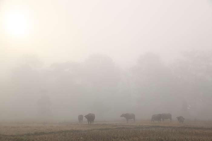 buffalo_mist.jpg