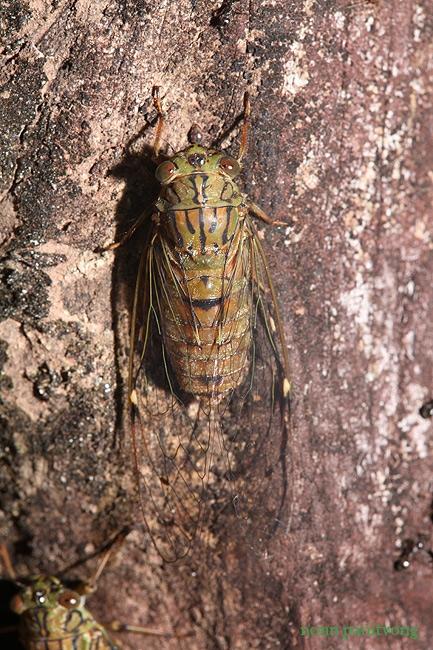 cicada_small.jpg