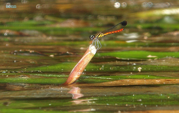 dragonfly4.jpg