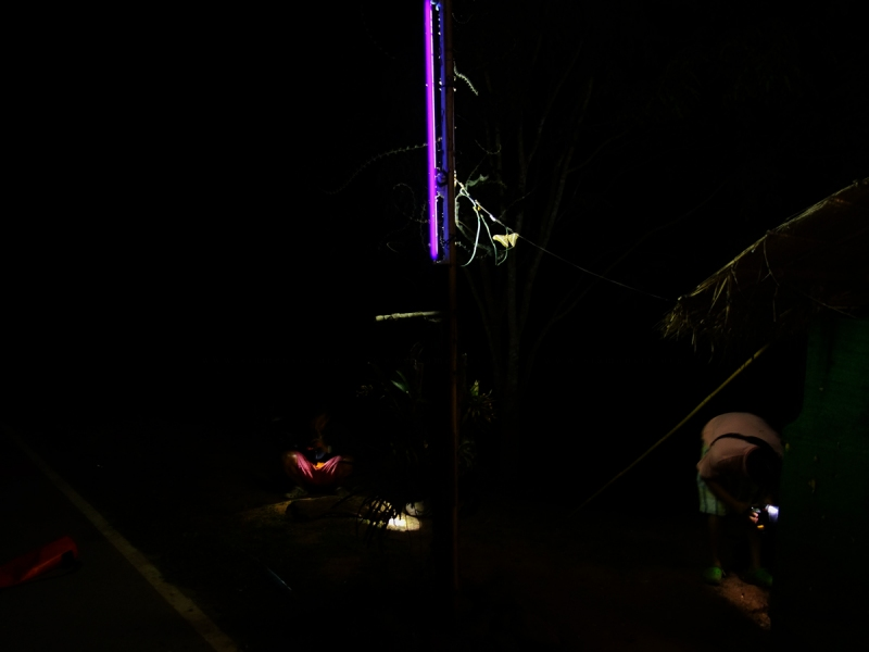 Light Trap สำหรับล่อแมลง กับดักนี้ใช้ไฟแบล็คไลท์(black light)ในการล่อ ซึ่งหลอดไฟชนิดนี้จะกระตุ้นการผสมพันธุ์ของแมลง