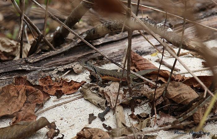 lizard_butterfly.jpg
