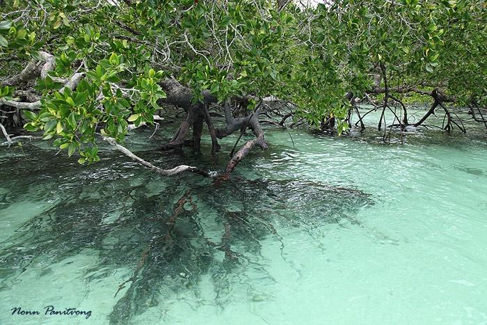 mangroove1.jpg