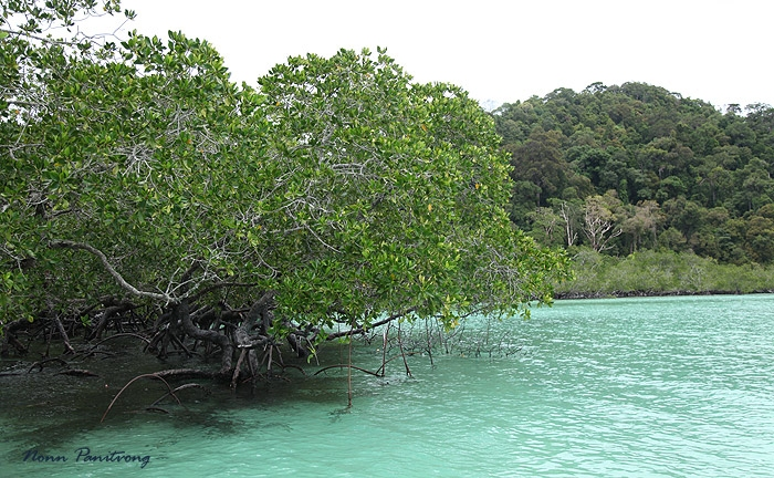 mangroove2.jpg