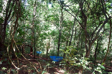 แปลงป่าที่เถาวัลย์เป็นปกติ ศึกษาเพื่อใช้เป็นชุดควบคุม