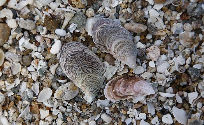 shell15.jpg
