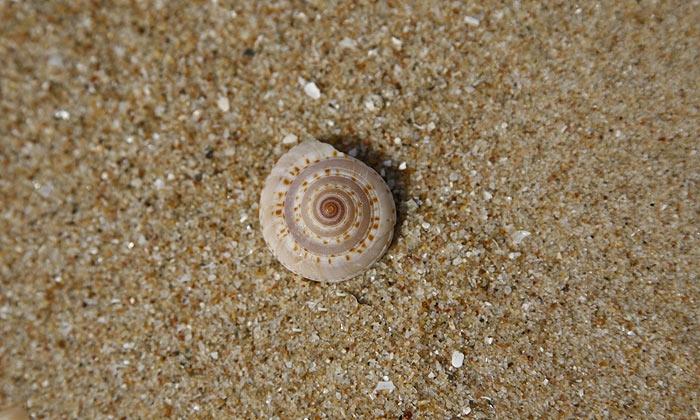 shell19.jpg