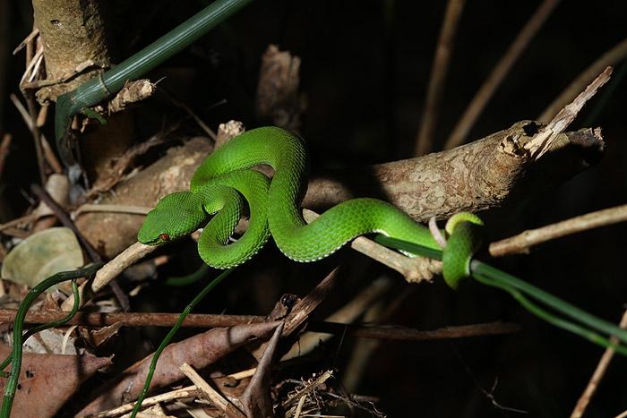 หางไหม้ท้องเขียว ตัวเมีย ตัวเล็ก งู(เป็น)ตัวเดียวของทริป