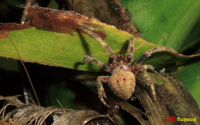 spider230.jpg
