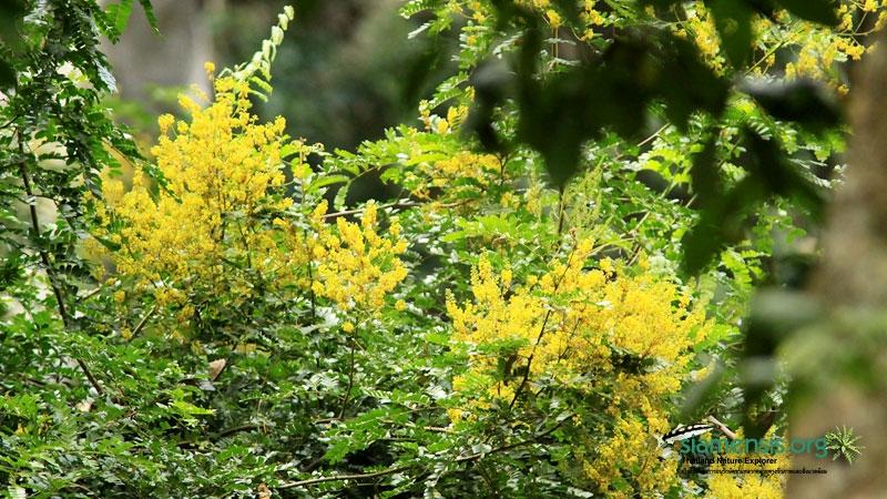 ดอกสีเหลืองๆ