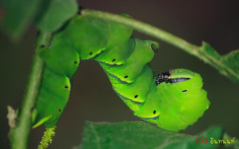 ตัวเล็กหน่อย สีเขียว